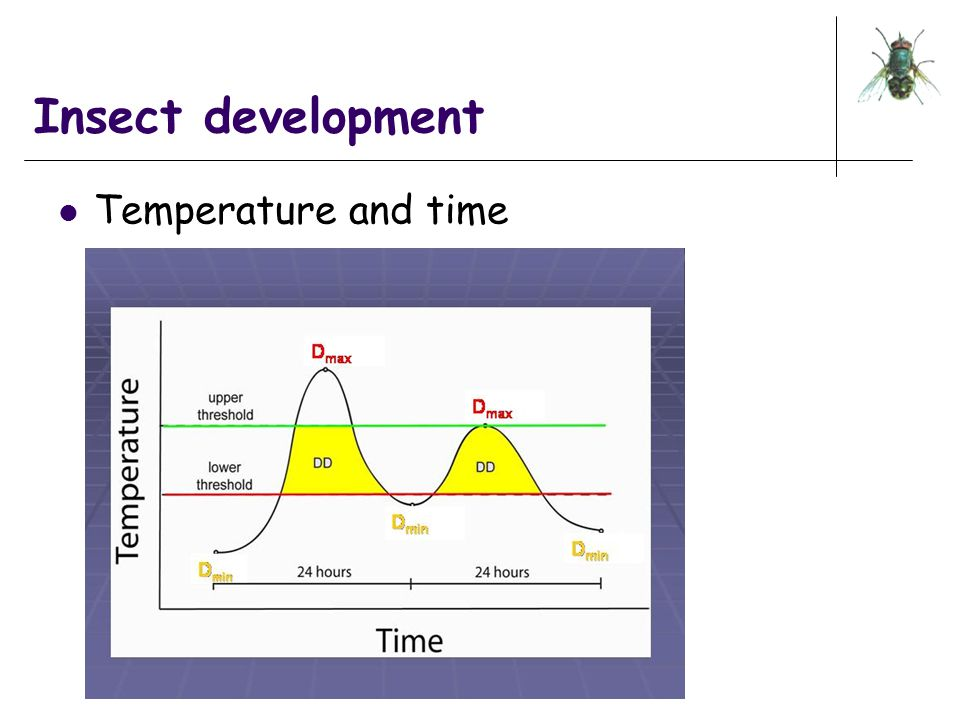 Insect development Temperature and time