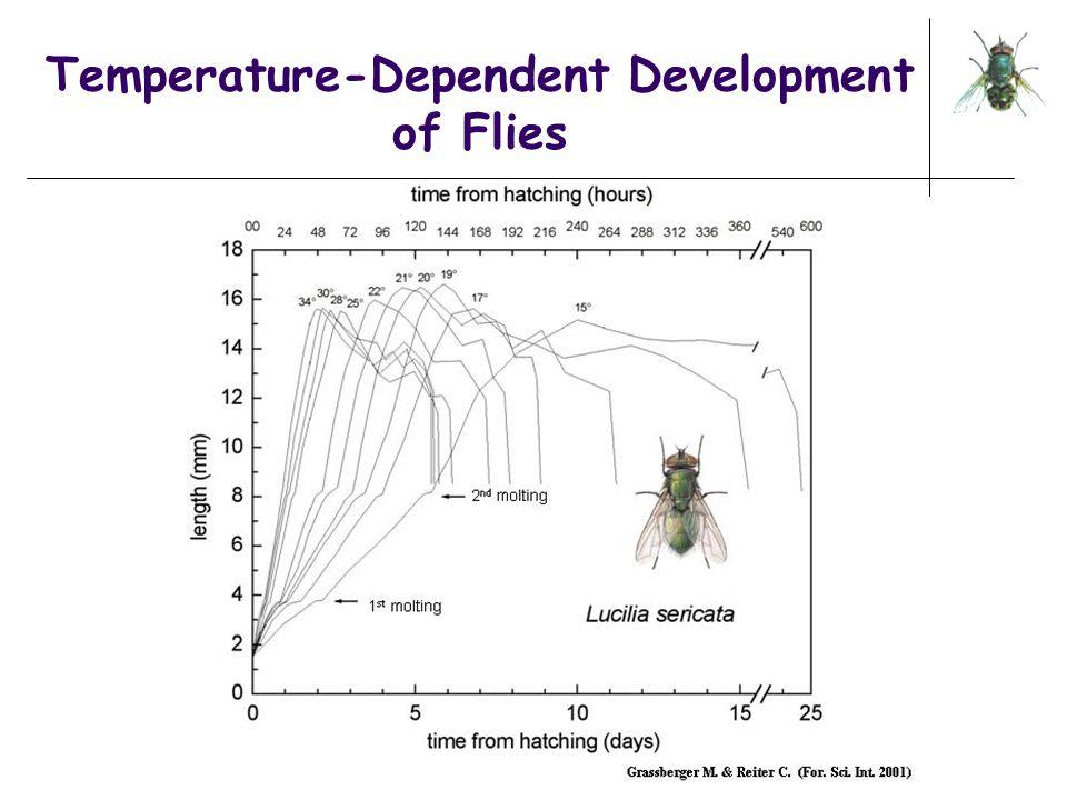 Temperature-Dependent Development of Flies