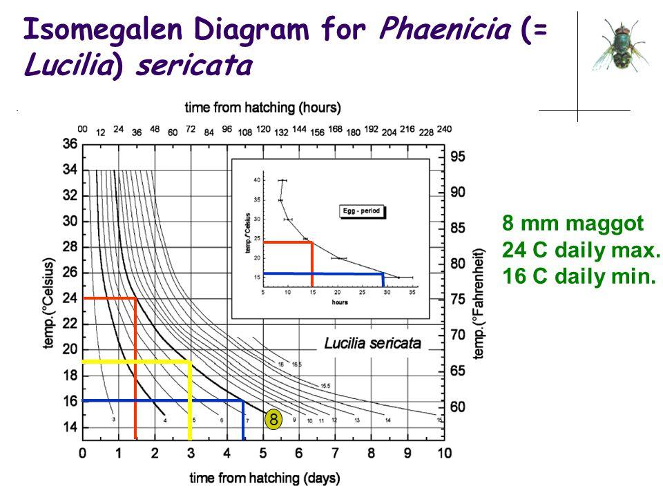 Isomegalen Diagram for Phaenicia (= Lucilia) sericata