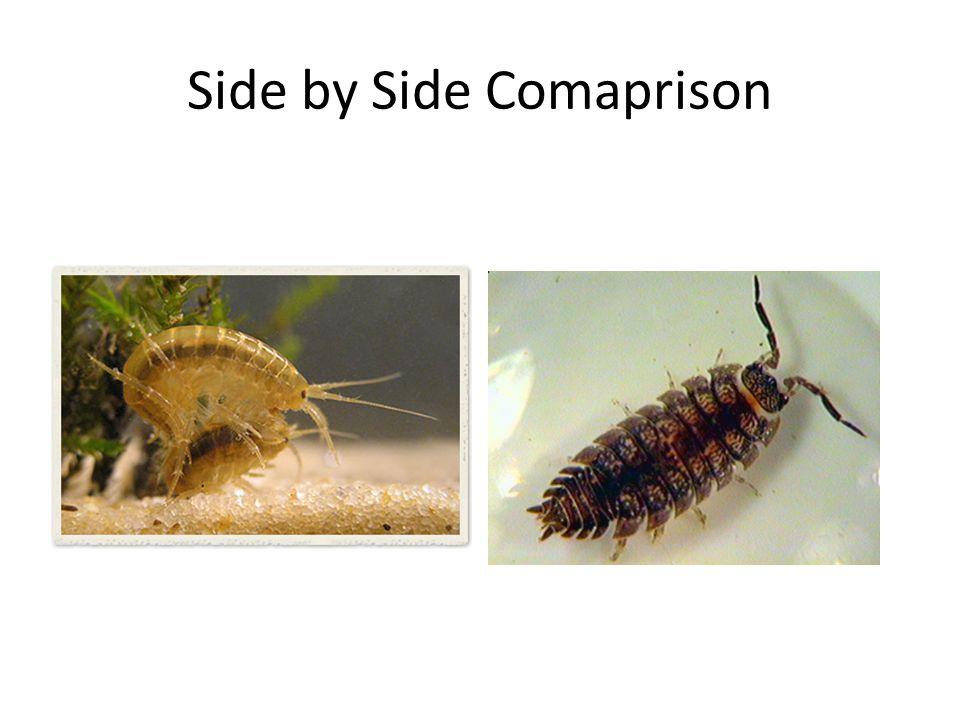 Side by Side Comaprison
