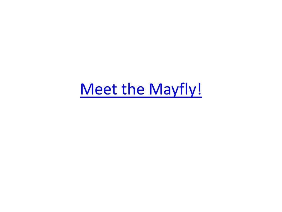Meet the Mayfly!