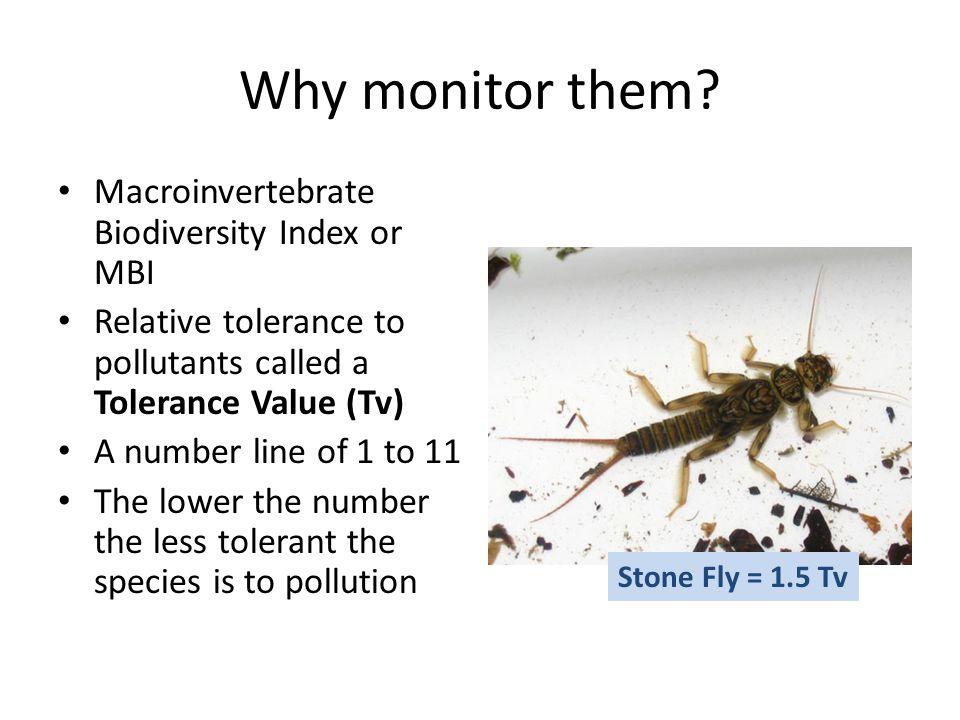 Why monitor them Macroinvertebrate Biodiversity Index or MBI