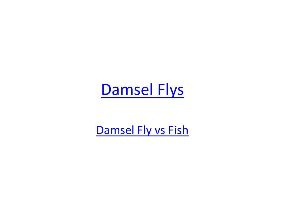 Damsel Flys Damsel Fly vs Fish