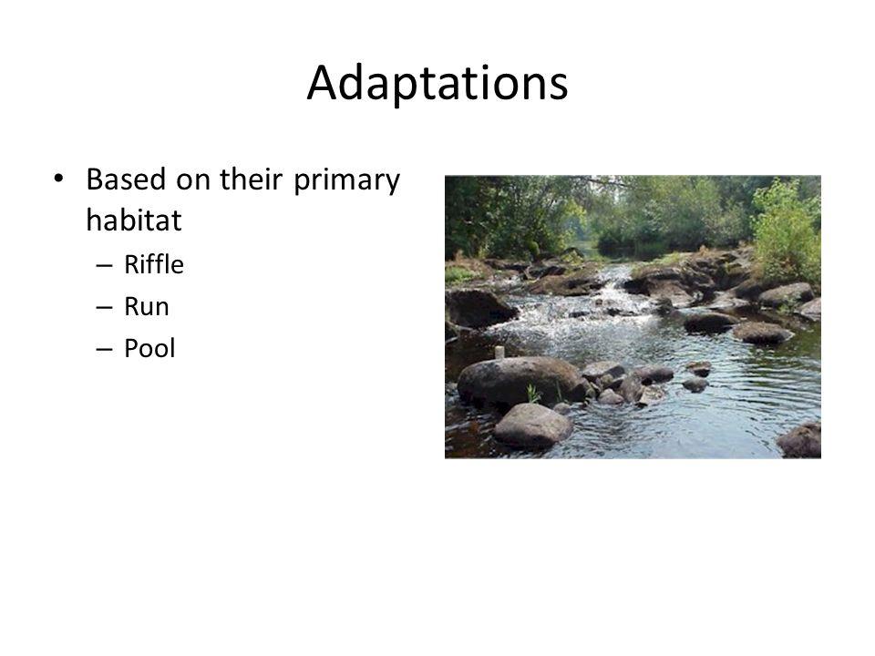 Adaptations Based on their primary habitat Riffle Run Pool
