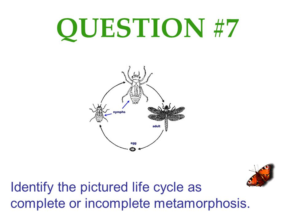 QUESTION #7 Identify the pictured life cycle as complete or incomplete metamorphosis.