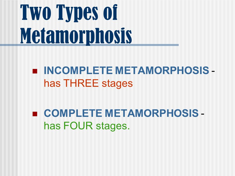 Two Types of Metamorphosis