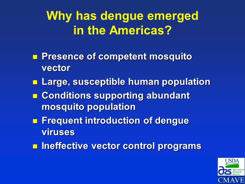 Why has dengue emerged in the Americas