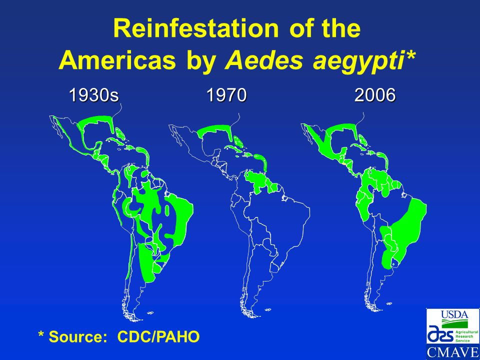 Reinfestation of the Americas by Aedes aegypti*