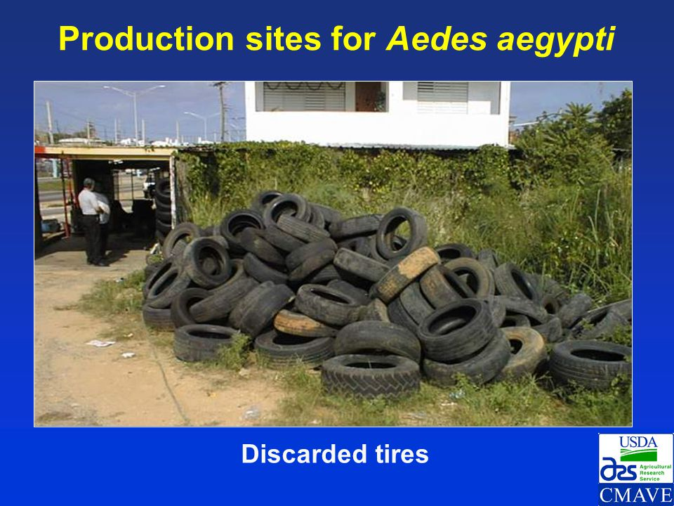 Production sites for Aedes aegypti