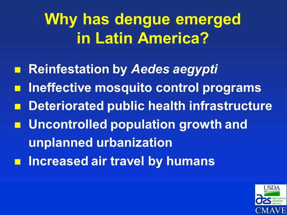 Why has dengue emerged in Latin America