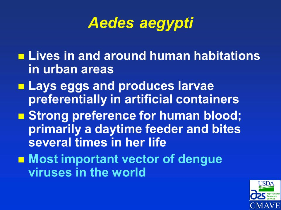 Aedes aegypti Lives in and around human habitations in urban areas