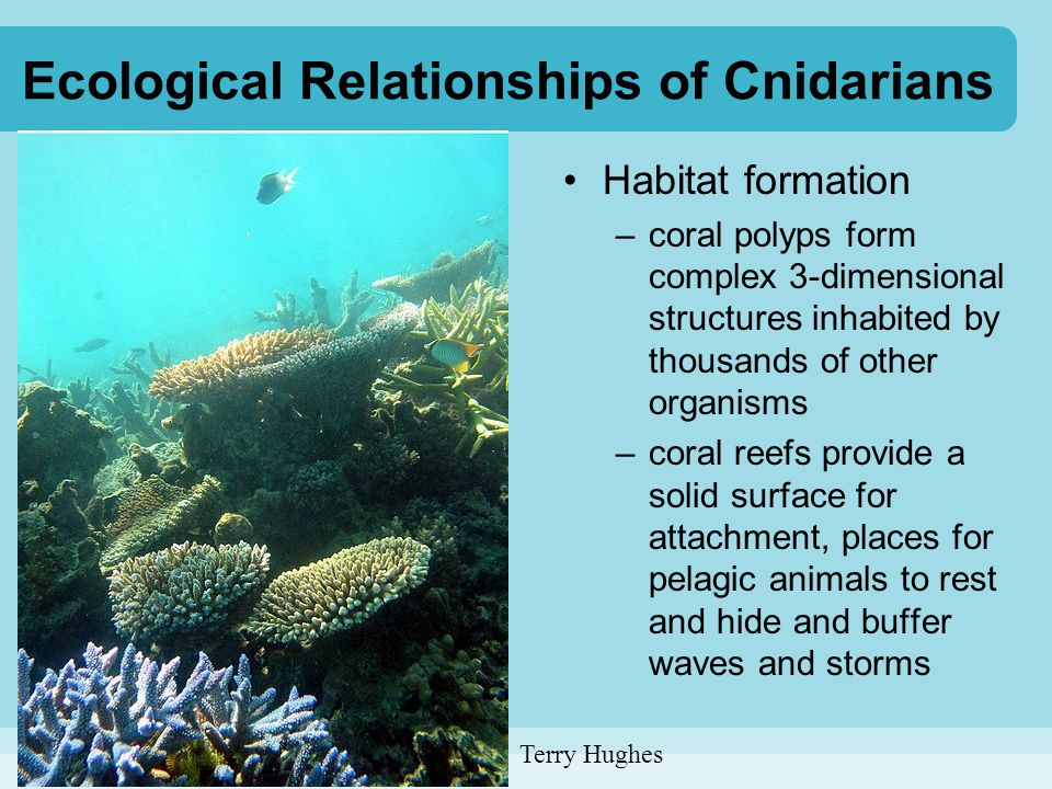 Ecological Relationships of Cnidarians