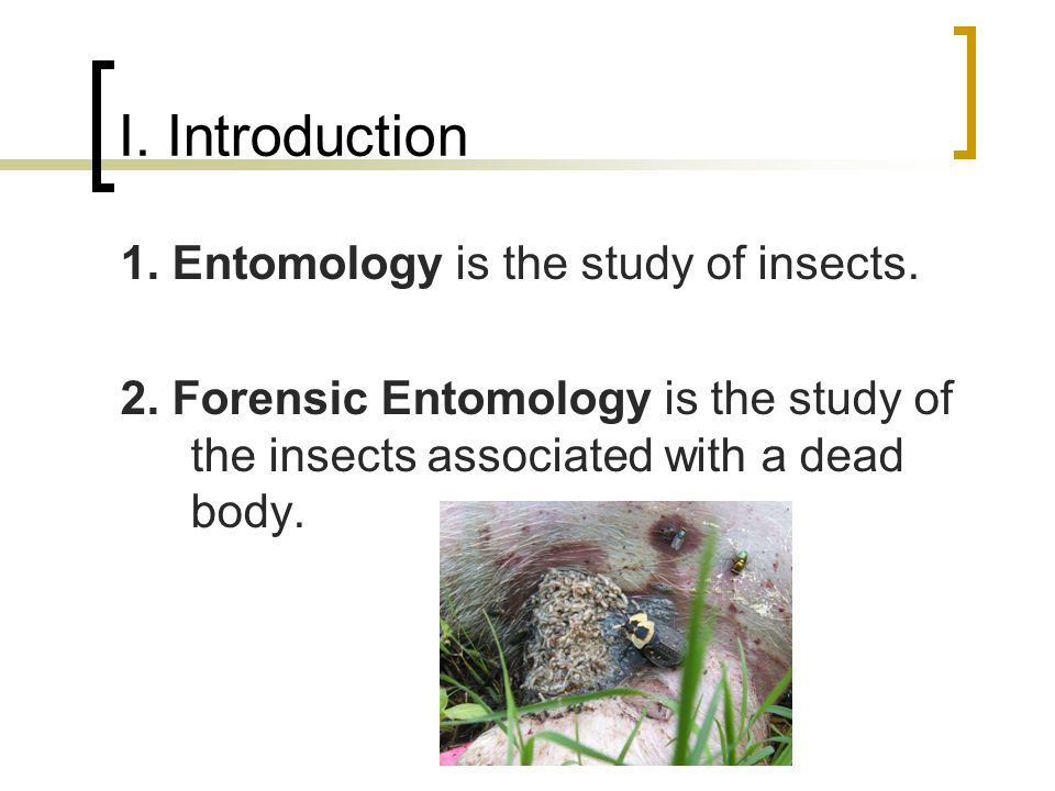I. Introduction 1. Entomology is the study of insects.
