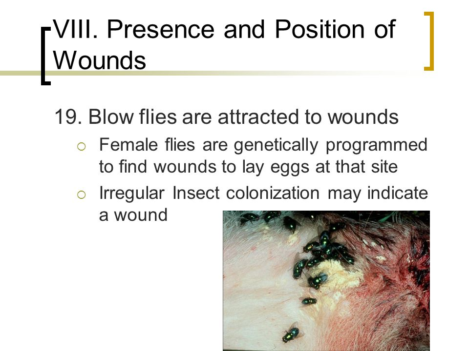 VIII. Presence and Position of Wounds