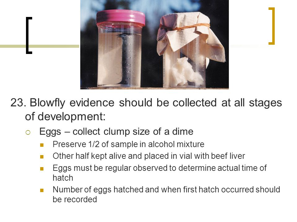 23. Blowfly evidence should be collected at all stages of development: