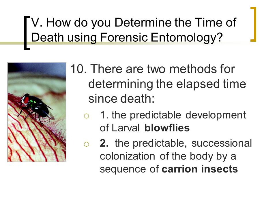 V. How do you Determine the Time of Death using Forensic Entomology