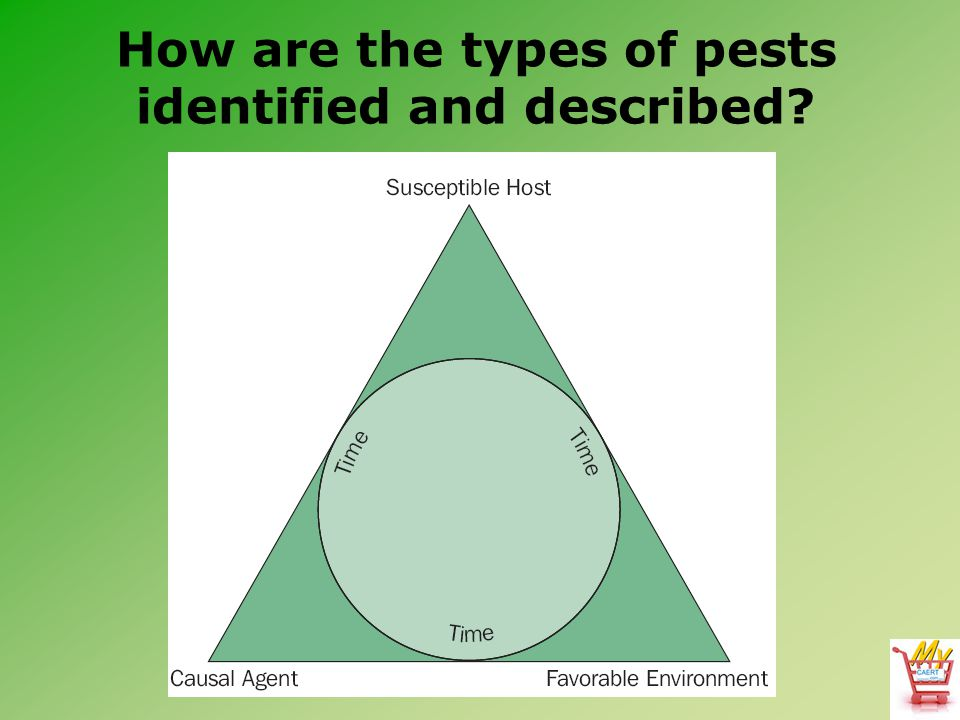 How are the types of pests identified and described