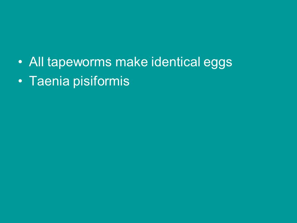All tapeworms make identical eggs