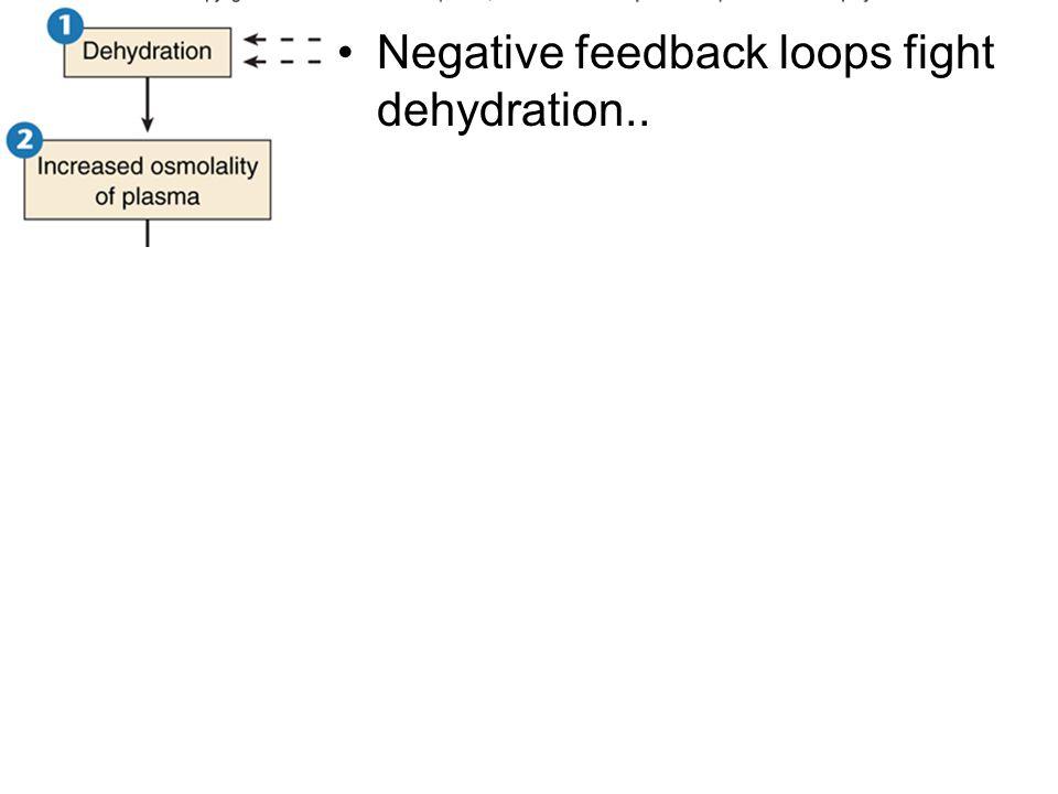Negative feedback loops fight dehydration..