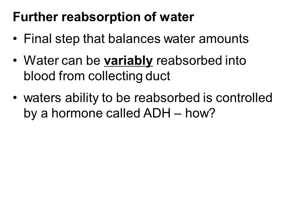 Further reabsorption of water