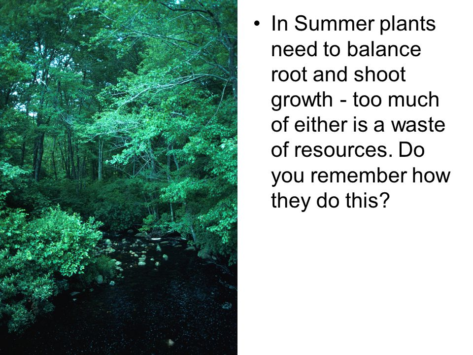 In Summer plants need to balance root and shoot growth - too much of either is a waste of resources.