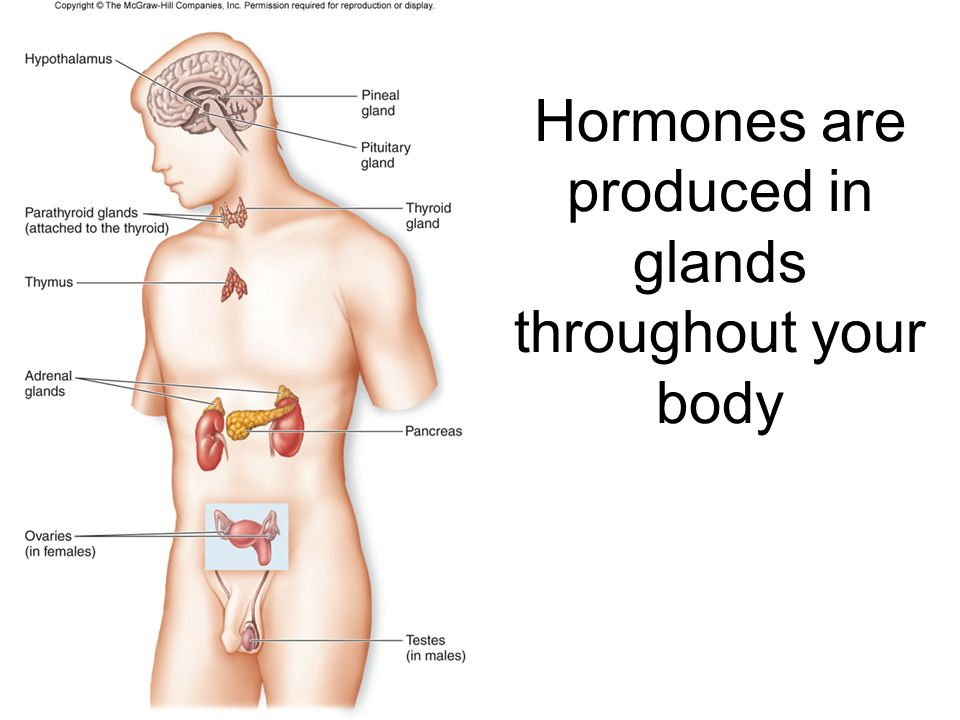 Hormones are produced in glands throughout your body