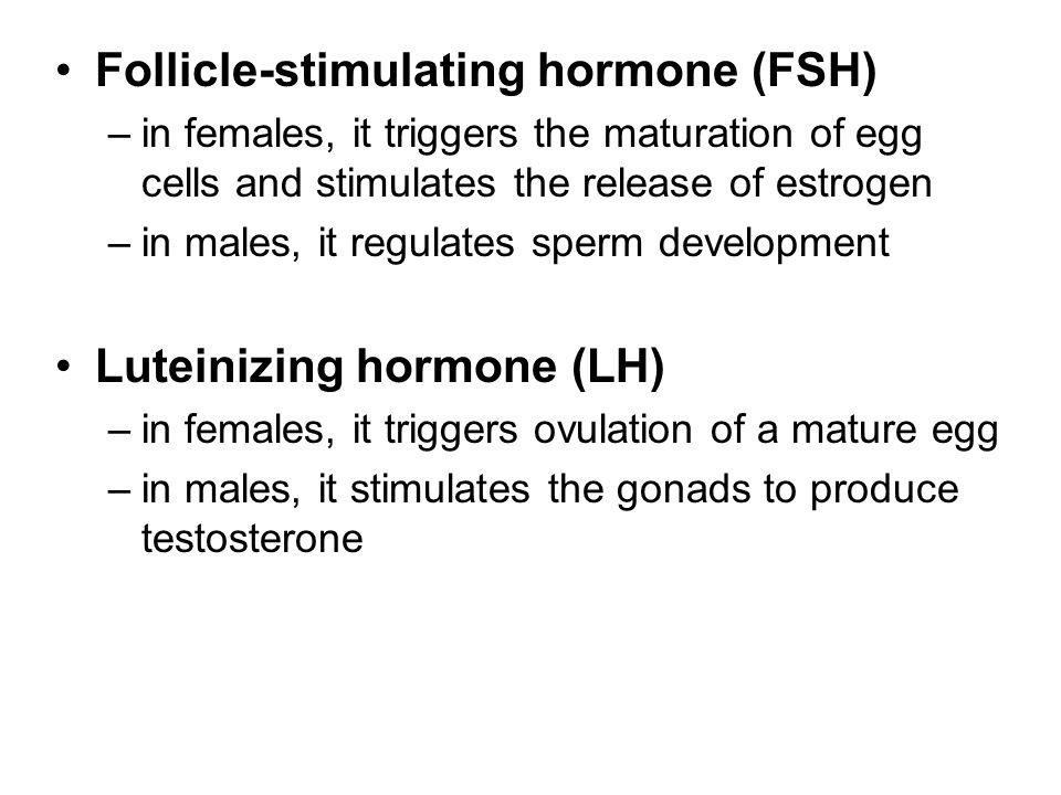 Follicle-stimulating hormone (FSH)