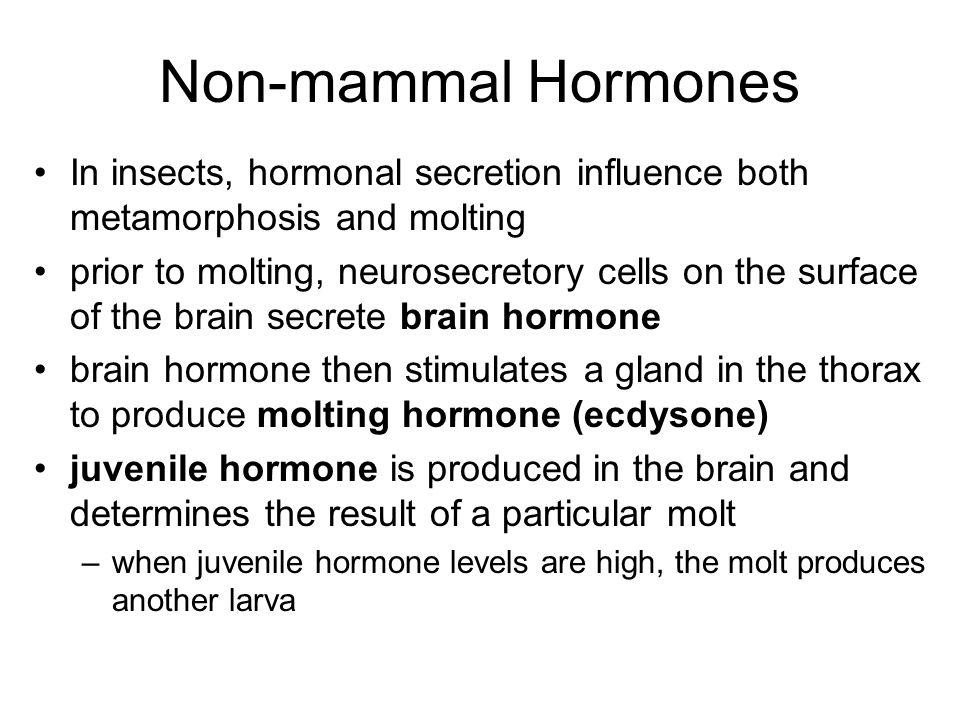 Non-mammal Hormones In insects, hormonal secretion influence both metamorphosis and molting.