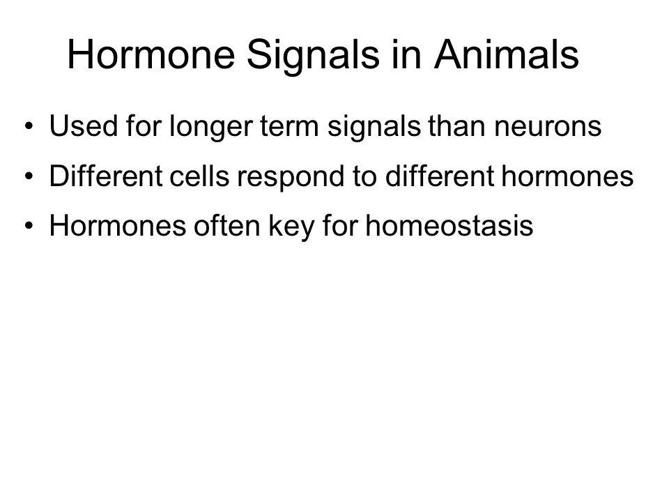 Hormone Signals in Animals