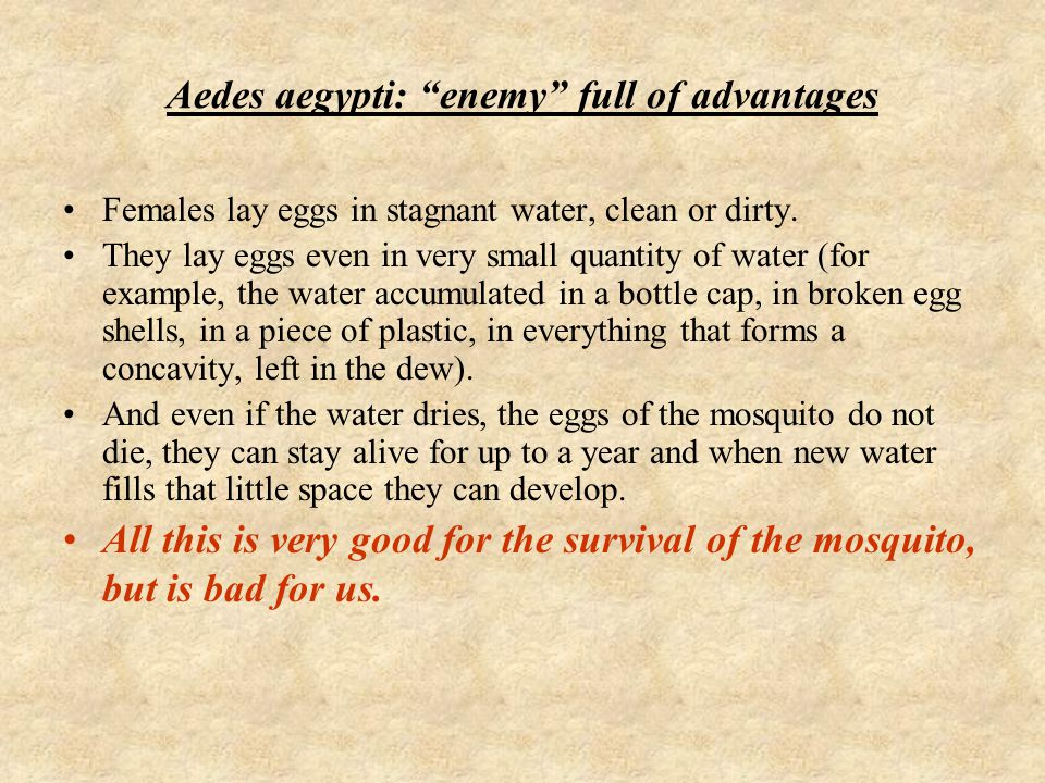 Aedes aegypti: enemy full of advantages