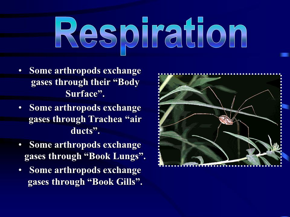 Respiration Some arthropods exchange gases through their Body Surface . Some arthropods exchange gases through Trachea air ducts .
