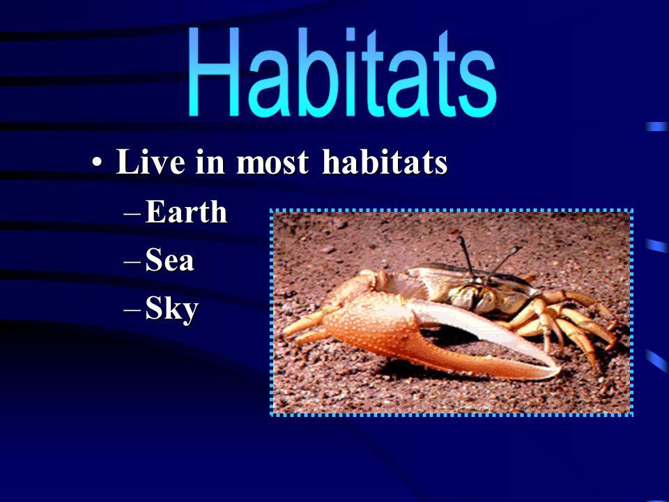 Habitats Live in most habitats Earth Sea Sky
