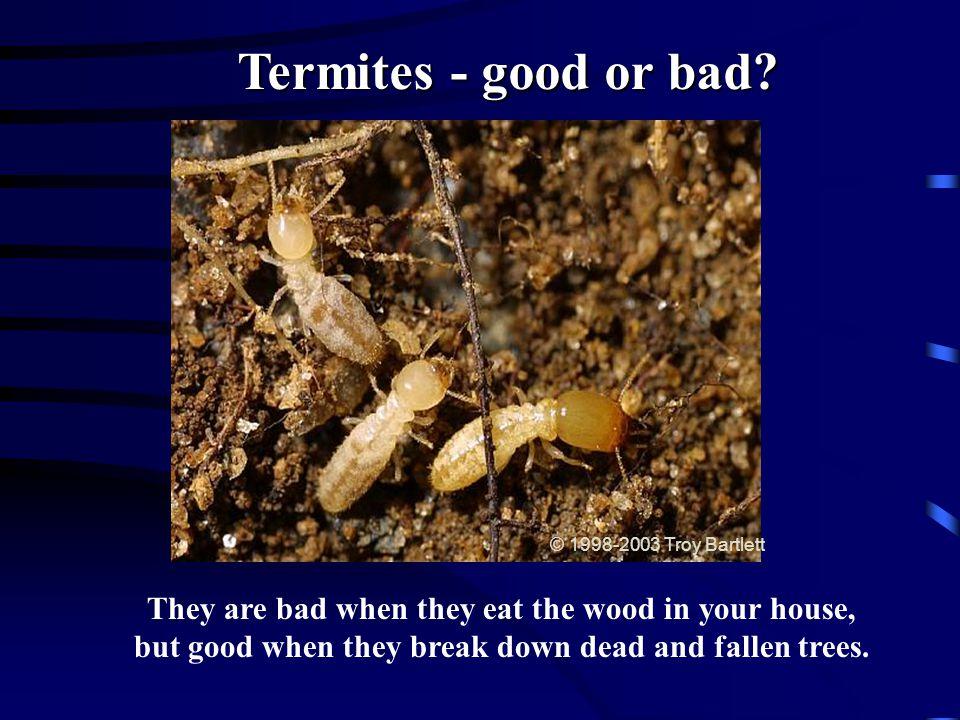 Termites - good or bad © 1998-2003 Troy Bartlett.