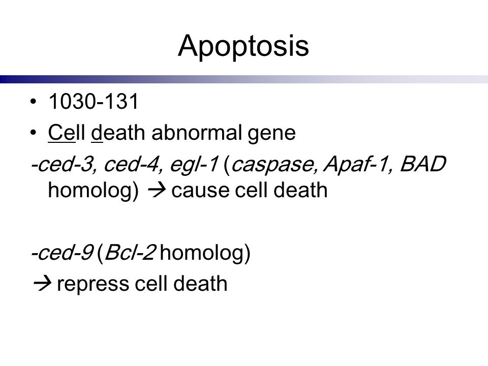 Apoptosis 1030-131 Cell death abnormal gene