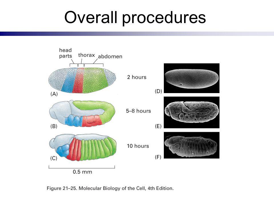 Overall procedures
