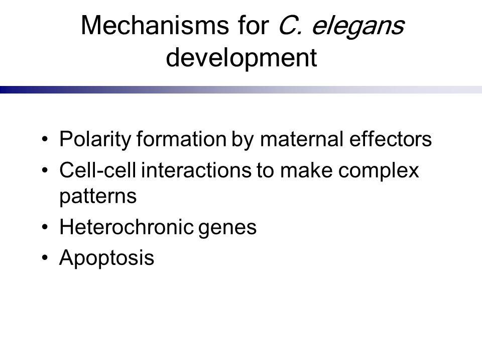 Mechanisms for C. elegans development
