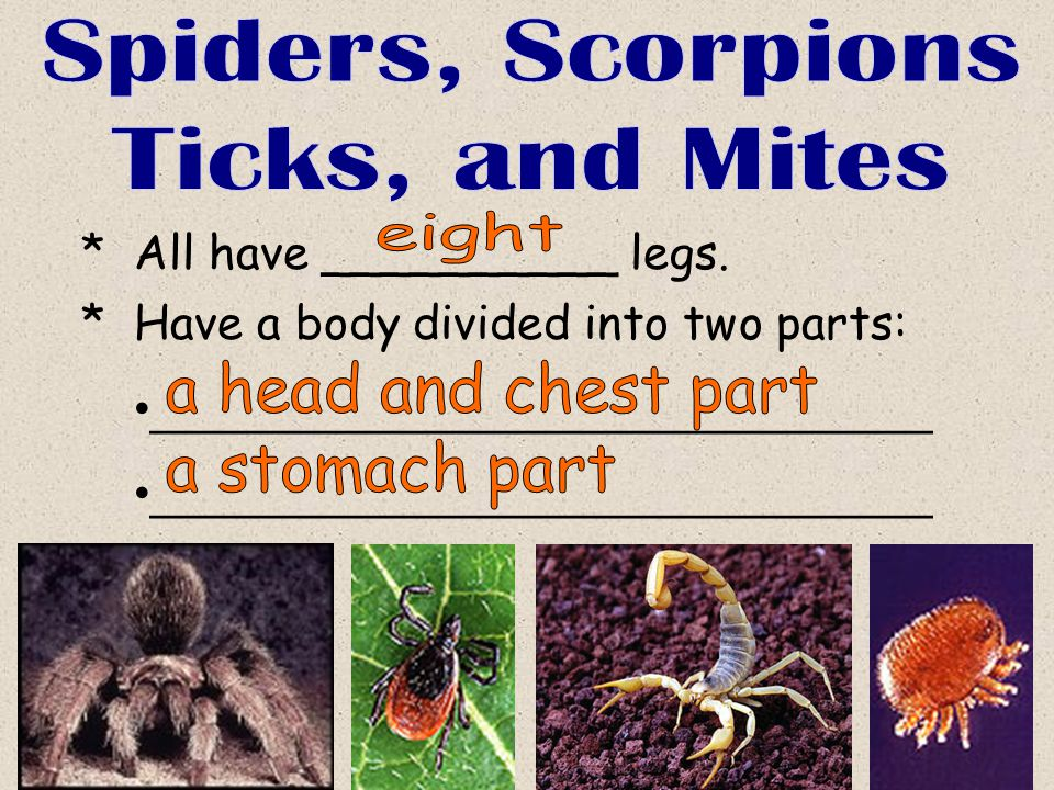 Spiders, Scorpions Ticks, and Mites eight a head and chest part
