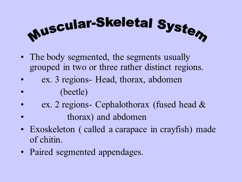 Muscular-Skeletal System