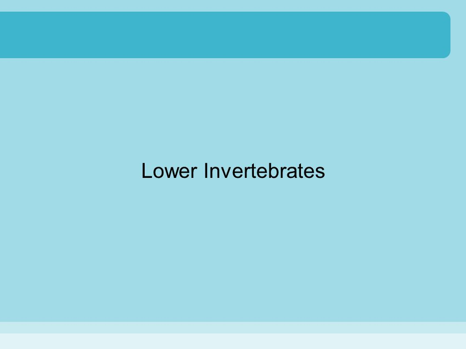 Lower Invertebrates
