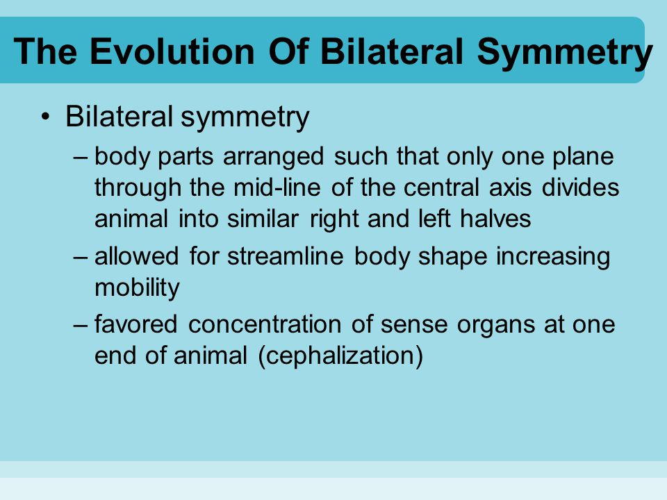 The Evolution Of Bilateral Symmetry