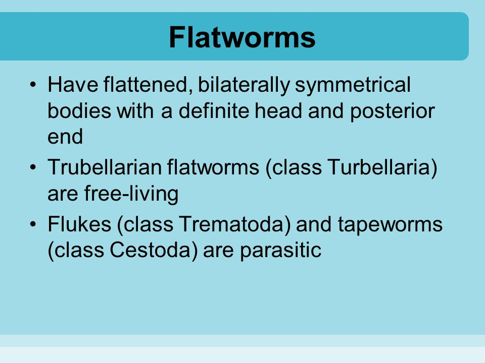 Flatworms Have flattened, bilaterally symmetrical bodies with a definite head and posterior end.