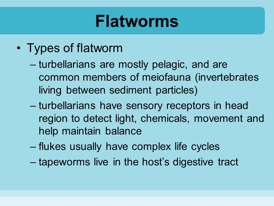 Flatworms Types of flatworm