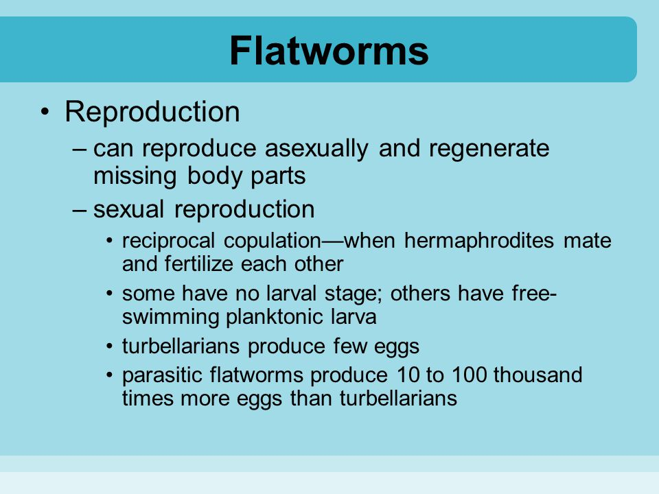 Flatworms Reproduction