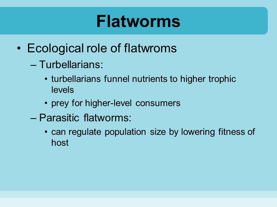 Flatworms Ecological role of flatwroms Turbellarians:
