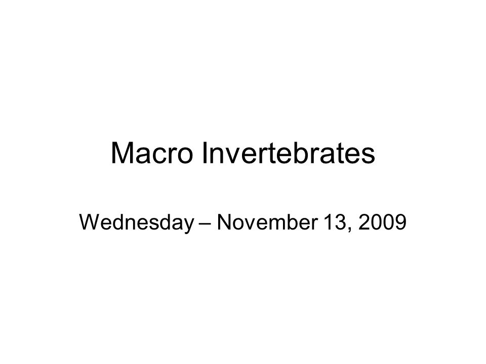 Macro Invertebrates Wednesday – November 13, 2009