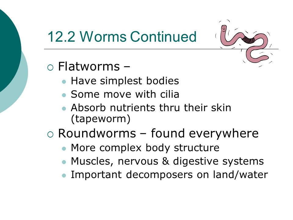 12.2 Worms Continued Flatworms – Roundworms – found everywhere