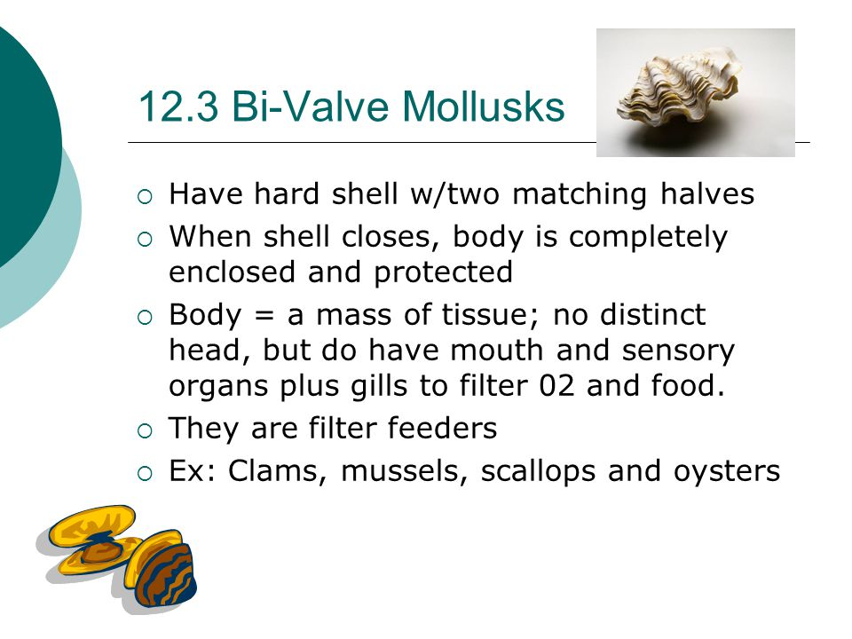 12.3 Bi-Valve Mollusks Have hard shell w/two matching halves