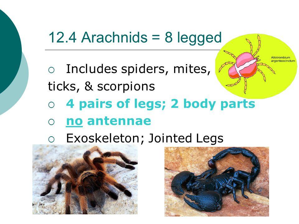 12.4 Arachnids = 8 legged Includes spiders, mites, ticks, & scorpions