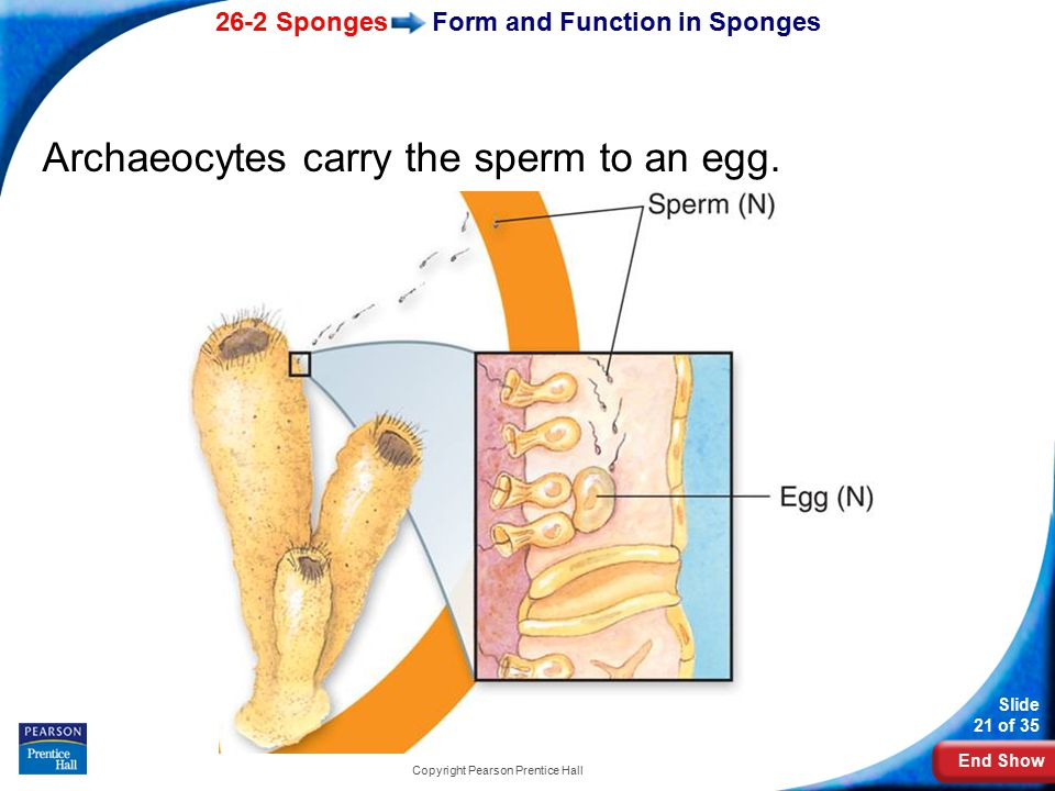 Form and Function in Sponges
