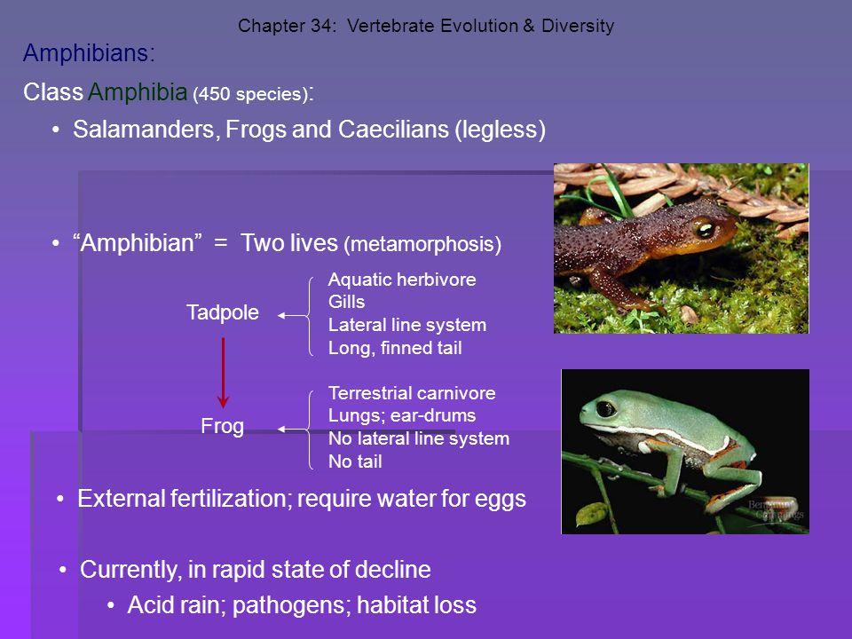 Class Amphibia (450 species):